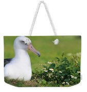 Laysan Albatross Nesting Hawaii Weekender Tote Bag
