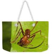 Leafcutter Ant Cutting Leaf Costa Rica Weekender Tote Bag
