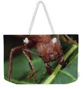 Leafcutter Ant Cutting Papaya Leaf Weekender Tote Bag