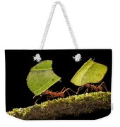 Leafcutter Ants Carrying Leaves Costa Weekender Tote Bag