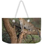 Leopard Panthera Pardus Sitting Weekender Tote Bag