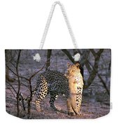 Leopard With African Wild Cat Kill Weekender Tote Bag