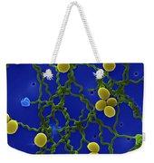 Leptospira Bacteria Sem Weekender Tote Bag
