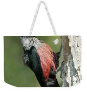 Lewiss Woodpecker With Fruit In Beak Weekender Tote Bag