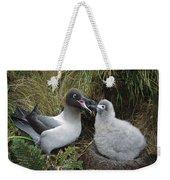 Light-mantled Albatross Feeding Chick Weekender Tote Bag