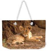 Lion Cub Panthera Leo Weekender Tote Bag