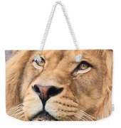 Lion In Deep Thought Weekender Tote Bag