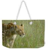 lion Masai Mara Kenya Weekender Tote Bag