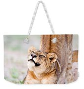 Lioness Panthera Leo Stretching Weekender Tote Bag