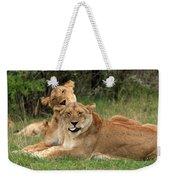 Lions Of The Masai Mara  Weekender Tote Bag