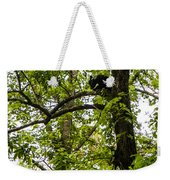 Little Bear Cub In Tree Cades Cove 2 Weekender Tote Bag