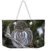 Little One - Northern Pygmy Owl Weekender Tote Bag