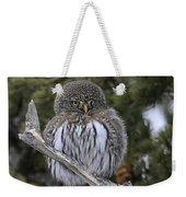 Little One - Northern Pygmy Owl Weekender Tote Bag
