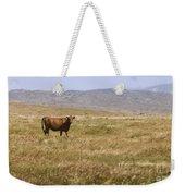 Lone Cow In Grassy Field Weekender Tote Bag