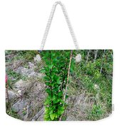 Lone Green Sapling Is The Cheer Leader Of The Flock Asking Humans To Leave Some Space For Them      Weekender Tote Bag