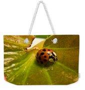 Lone Lady Bird Beetle Weekender Tote Bag