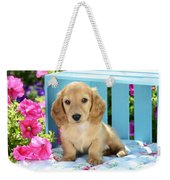 Long Eared Puppy In Front Of Blue Box Weekender Tote Bag