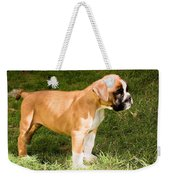 long tailed Boxer Puppy in the sun Weekender Tote Bag