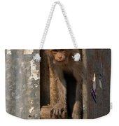 Macaque Peeking Out Weekender Tote Bag