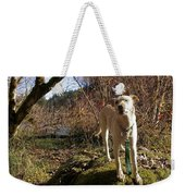 Maisie On A Rock Weekender Tote Bag