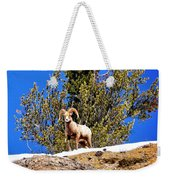 Majestic Big Horn Sheep Weekender Tote Bag