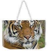 Malayan Tiger 1 Weekender Tote Bag