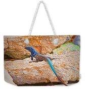 Male Bonaire Whiptail Lizard Weekender Tote Bag