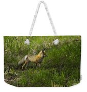 Male Fox   #3521 Weekender Tote Bag