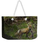 Male Fox And Pup   #3554 Weekender Tote Bag