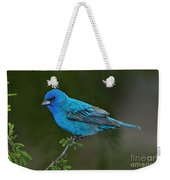 Male Indigo Bunting Weekender Tote Bag