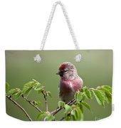 Male Lesser Redpoll  Carduelis Cabaret Weekender Tote Bag