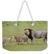 Male Lion Teaches Cubs Weekender Tote Bag