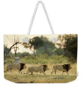 Male Lions At Dawn, Moremi Game Weekender Tote Bag