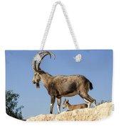 Male Nubian Ibex Weekender Tote Bag