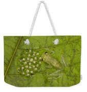Male Reticulated Glass Frog  Guarding Weekender Tote Bag