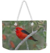 Male Scarlet Tanager Weekender Tote Bag