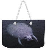 Manatee In The Rain Weekender Tote Bag