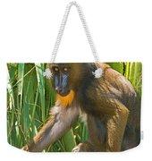 Mandrill Female Weekender Tote Bag