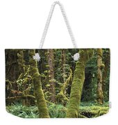Maple Glade Quinault Rain Forest Weekender Tote Bag