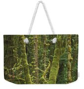 Maple Glade Quinault Rainforest Weekender Tote Bag