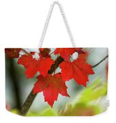 Maple Leaves Show Off Their Autumn Hues Weekender Tote Bag