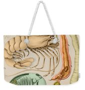 Marine Fauna Weekender Tote Bag