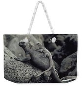 Marine Iguanas Galapagos Islands Weekender Tote Bag