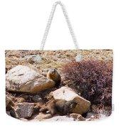 Marmots On Mount Evans Weekender Tote Bag