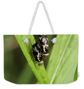 Mating Fruit Flies Weekender Tote Bag