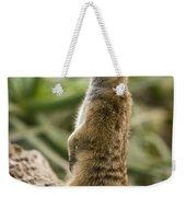 Meerkat Mongoose Portrait Weekender Tote Bag