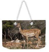 Mesopotamian Fallow Deer 2 Weekender Tote Bag