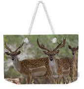 Mesopotamian Fallow Deer 5 Weekender Tote Bag