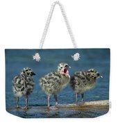 Mew Gull Three Chicks Weekender Tote Bag by Tom Vezo