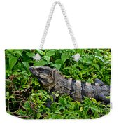 Mexican Spinytailed Iguana  Weekender Tote Bag